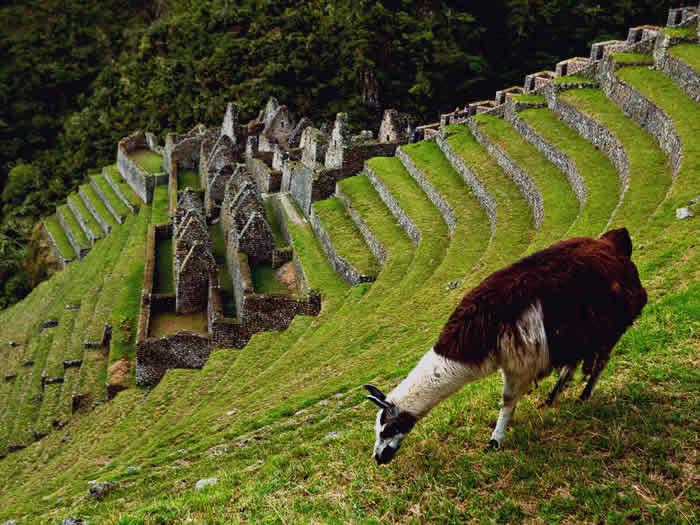 Camino Inca Clasico Bios Wild